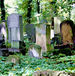 """Upptäck projektet """"En kyrkogård för eftervärlden"""""""