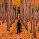 Suche nach Name in den Bäumen